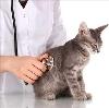 Ветеринарные клиники в Бетлице